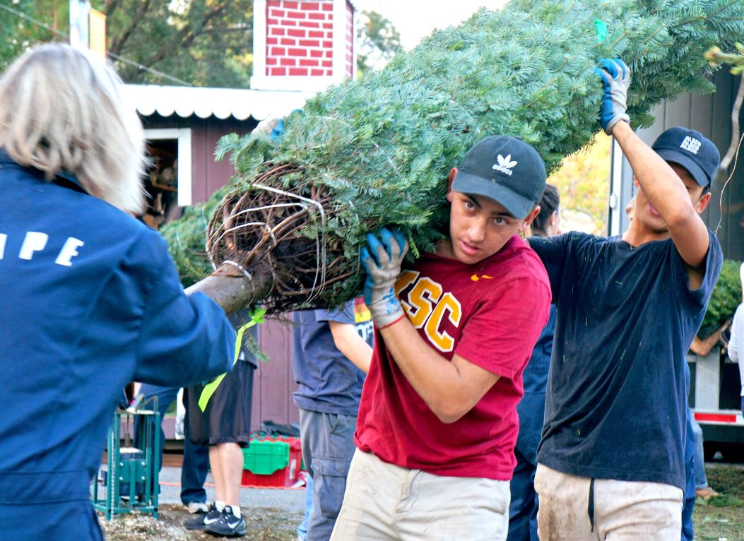 Photo by Mirjam Swanson / OUTLOOK Colin Jacobs, a senior at St. Francis High School, carries a Christmas tree after unloading it from a truck that delivered 835 trees from Oregon to the Crescenta Cañada YMCA on Sunday.