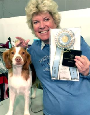 "Photo courtesy Nancy Reardon Nancy Reardon shows off her Brittany-breed dog, Joe, who won ""Select Dog"" recently at the Westminster Kennel Club Dog Show in New York City."