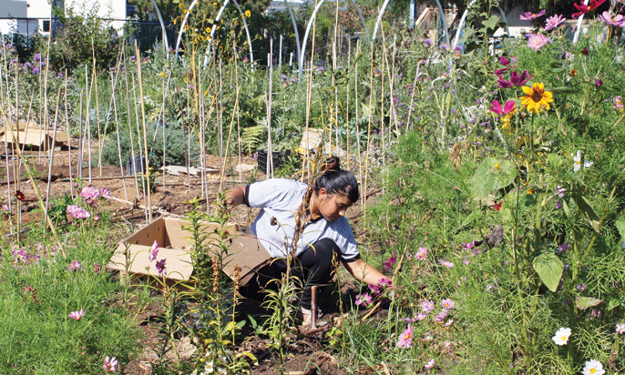 OUTLOOK photo Alondra Suaste tends to flower beds at Muir Ranch, a two-acre urban farm on the campus of John Muir High School.